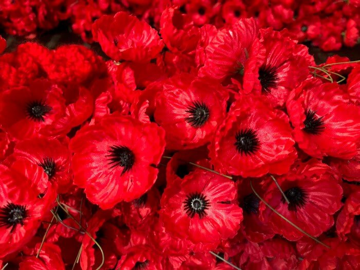 Remembrance Day - Poppies